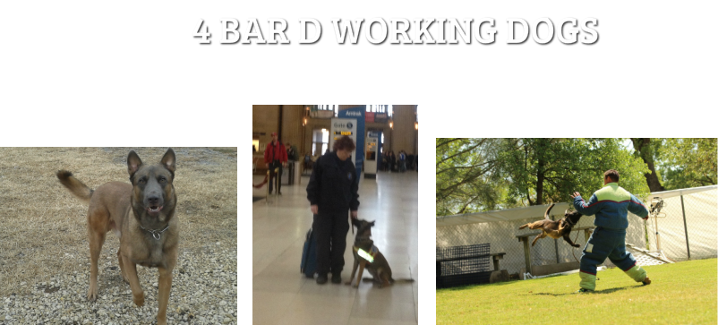 4 BAR D WORKING DOGS